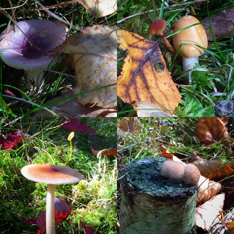 Mushroom Enthusiast
